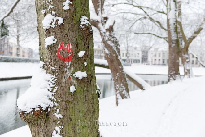 winter_c8a8813